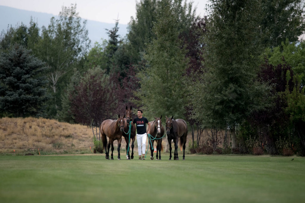 Polo player guiding polo ponies